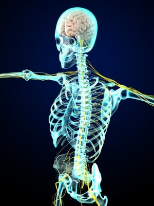 背骨 神経