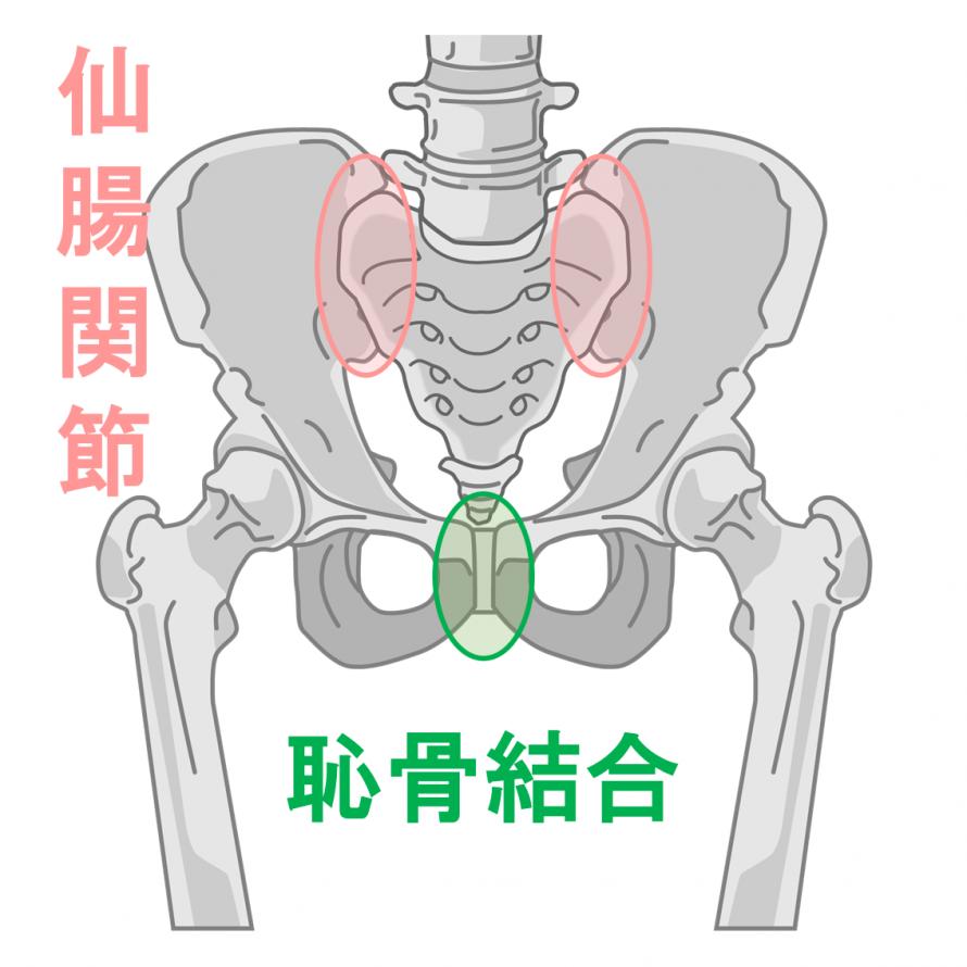 骨盤 恥骨 仙腸関節