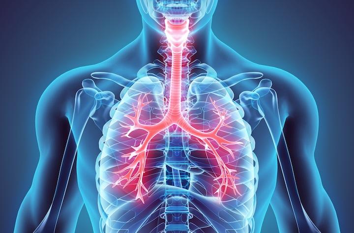 肺 気管 気管支