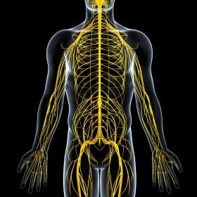 神経 運動